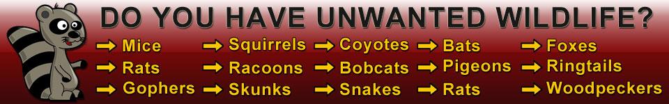 Contact Arizona Wildlife Control Today!