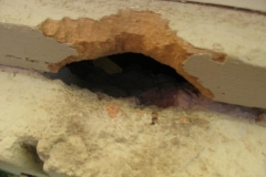 property-damaged-by-rats-1